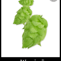 Bulk Warrior Hops - Small Batch Brew