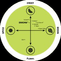 Enigma Hops Flavour Profile