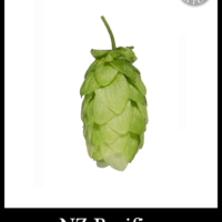 Bulk NZ Pacifica Hops - Small Batch Brew